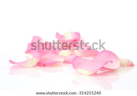 petals of roses - stock photo