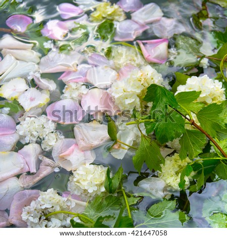Petals of rosy roses and white flowers for background - stock photo