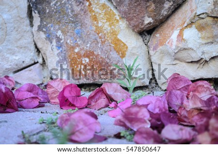 Petals on the ground