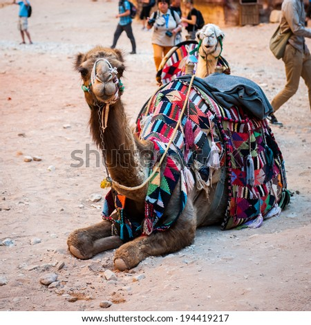 PETRA, JORDAN - APR 29, 2014: Camels in Petra. The city of Petra was lost for over 1000 years. Now one of the Seven Wonders of the Word