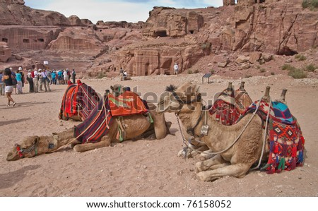 PETRA, JORDAN - NOV 24:  Bedouin camels provide tourist rides through the magnificent ruins of ancient Petra on November 24, 2010 in Petra, Jordan. Petra is a UNESCO World Heritage Site since 1985.