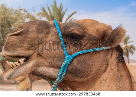 Petra landscape with beduin tent, Jordan - stock photo