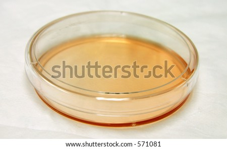 Petri dish (tissue culture plate) shot from above. - stock photo