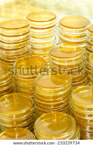 petri dishes with culture medium in the laboratory - stock photo