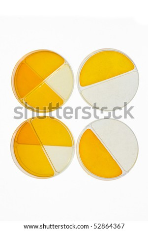 Petri dishes with media culture for medical and cancer research concept isolated on white background - stock photo