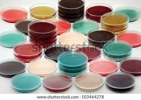 Petri plates containing different culture media in a refrigerator/petri dishes with culture medium - stock photo