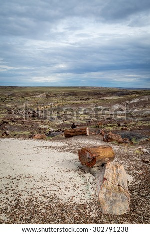 Petrified Forest Landscapes