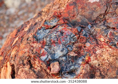 Petrified logs in the Painted desert and Petrified forest national park, Arizona, USA - stock photo