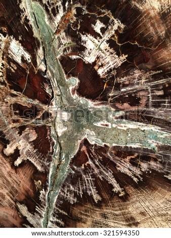 Petrified Wood - stock photo