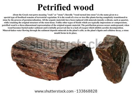 Petrified wood isolated on white - stock photo