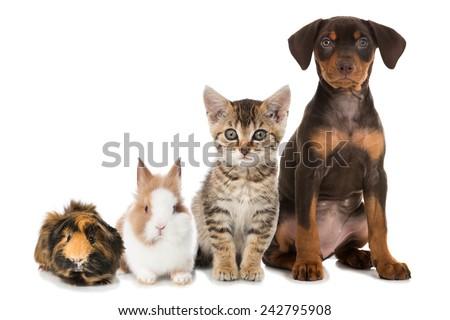 Pets - stock photo