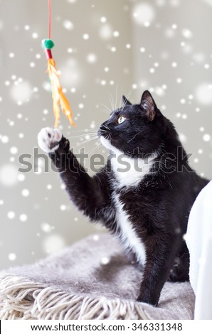 pets and playing concept - black and white cat playing with feather toy over snow effect - stock photo