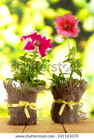 Petunias in pots on wooden table on nature background