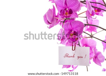 Phalaenopsis beautiful flowers on a white background - stock photo