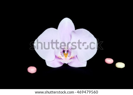 Phalaenopsis Orchid  isolated. Pink and white still life on black background. Composition.