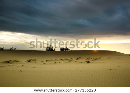 PHAN RANG province, VIETNAM, January 3, 2015 - two shepherds and two buffaloes passing sand dunes in the early morning