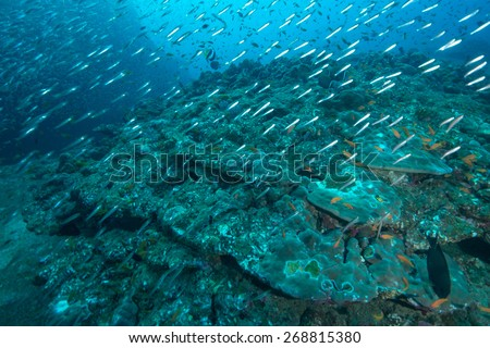 Phang Nga, THAILAND - FEB 27: Coral and fish underwater in Similan Islands, Thailand on February 27, 2015.