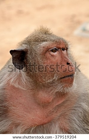 Phetchaburi, Thailand - APRIL 25: 2015. Monkey at Khao Wang  in Phetchaburi, Thailand.
