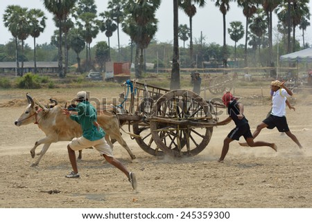 PHETCHABURI, Thailand - FEBRUARY 16 : Cow Racing Festival on February 16, 2014. A cart-yoking cow race in Thailand.This festival is held every year after rice harvest. - stock photo