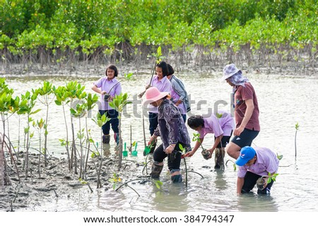 Phetchaburi Thailand, 9 June :Volunteers join together and Thai student plant young tree in deep mud in mangrove reforestation on June 9, 2014 in Phetchaburi Thailand.
