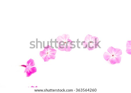 phlox flowers on a white background - stock photo