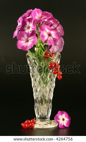 Phloxes in a crystal vase on a black background. - stock photo