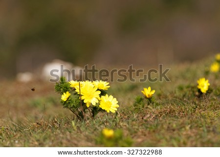 Photo beautiful small yellow flower in the field - stock photo