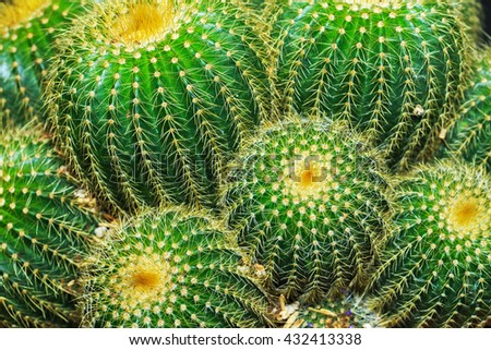Photo close up cactus with yellow spines thorns leaves with stiff ends - stock photo