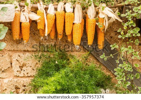 Photo closeup autumn still life many bunches of vivid organic natural dried uncooked ripe golden yellow corns on wooden stick at aged mansory wall on rustic background, horizontal picture - stock photo