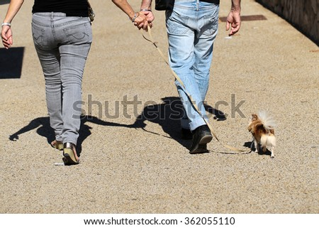 Photo closeup back view of couple two people woman and man wearing jeans holding hands and walking small cute dog on leash on sunny day on urban background, horizontal picture  - stock photo