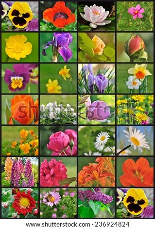 photo collage of different garden flowers - stock photo