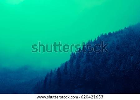 Photo depicting a backdrop foggy mystic pine tree woods in the mountains. Dark creepy scene.