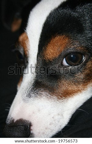 photo detail of puppy head