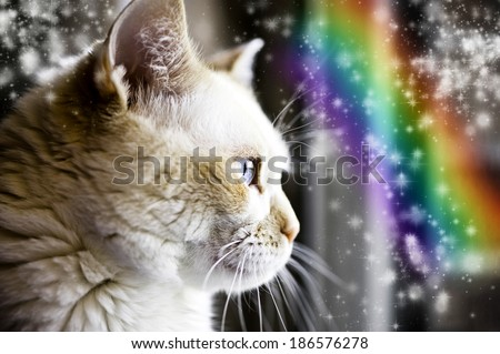 Photo illustration of cream-colored cat looking at mystical rainbow - stock photo