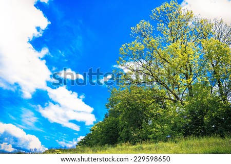 Photo Landscape with tree in the meadow on background sky - stock photo