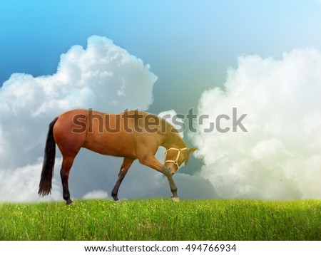 Photo manipulation of brown horse on horizon