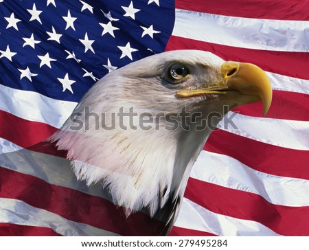 Photo montage: American bald eagle and American flag - stock photo