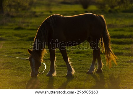 Photo of a beautiful adult horse walks on a green field - stock photo