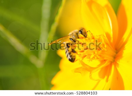 photo of a beautiful bee and flowers a sunny day.