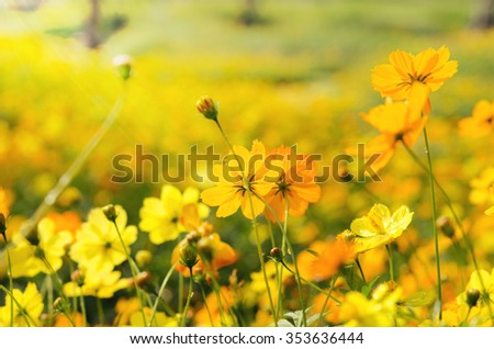 photo of a beautiful yellow flora. flower landscape in sunny day - stock photo