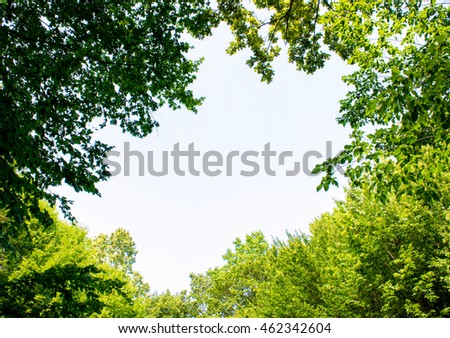 Photo of a big gap among trees in a green beautiful forest