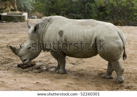 photo of a big wild rhinoceros in the zoo