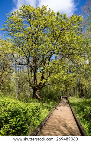 stock-photo-photo-of-a-boardwalk-in-the-woods-in-spring-269489060.jpg