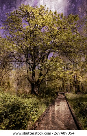 stock-photo-photo-of-a-boardwalk-in-the-woods-in-spring-oil-painting-filter-added-269489054.jpg