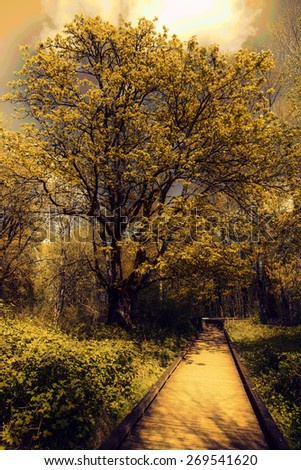 stock-photo-photo-of-a-boardwalk-in-the-woods-in-spring-vintage-filter-added-269541620.jpg