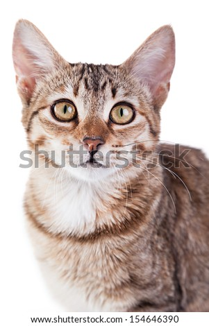 Photo of a brown striped kitten isolated on white background. Studio shot. - stock photo
