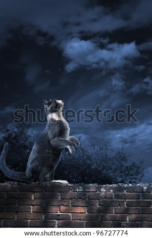 photo of a cat looking at the sky - stock photo