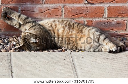 Photo of a cat lounging in the sun