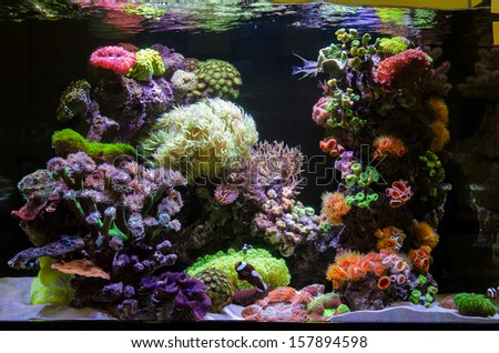 Photo of a coral colony - stock photo