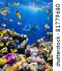 Photo of a Coral colony, coral fish and young women on a coral reef - stock photo